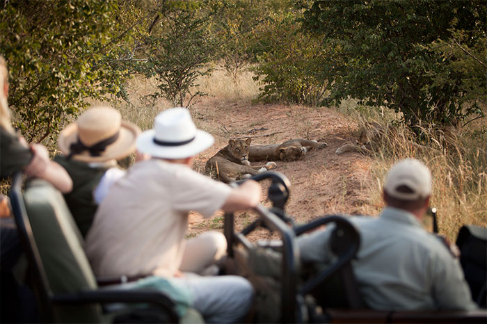 Savanna Safaris Classic Safari Kapama Game Reserve image