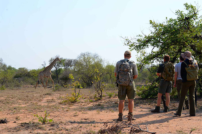 Savanna Safaris Explorer Safari Africa on Foot image