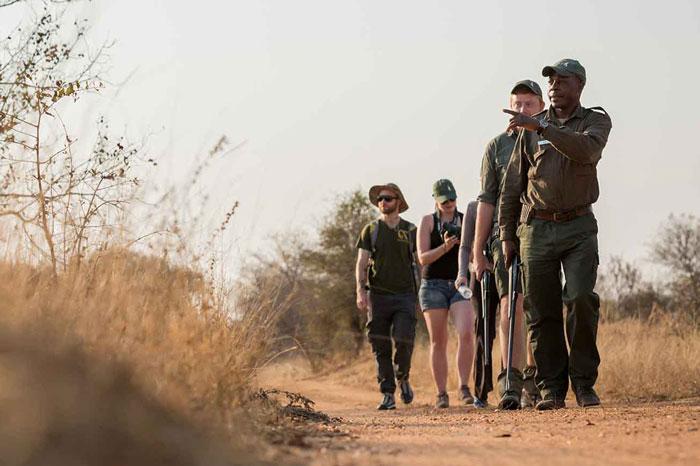 Explorer Safari