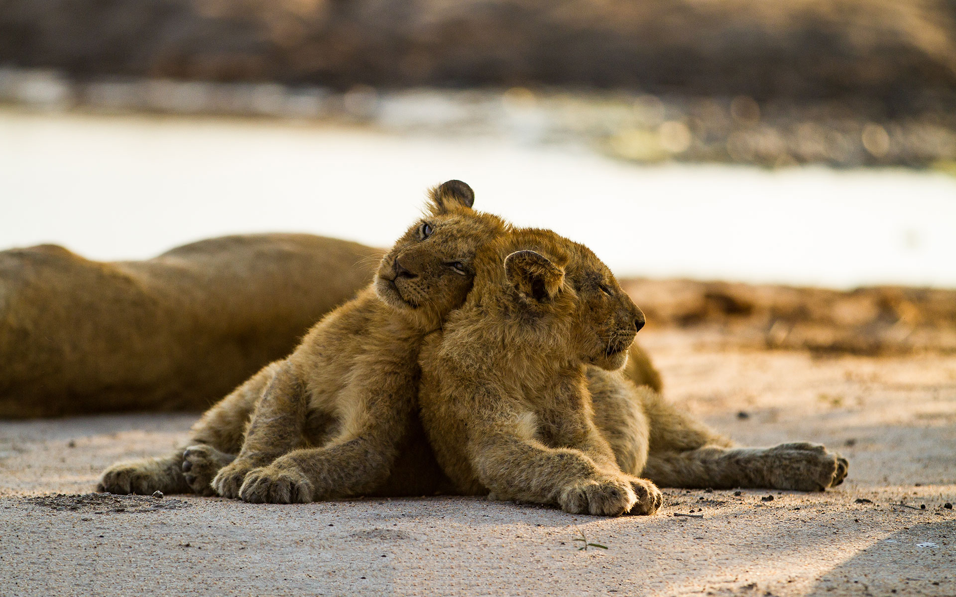 Savanna Safaris Cubs